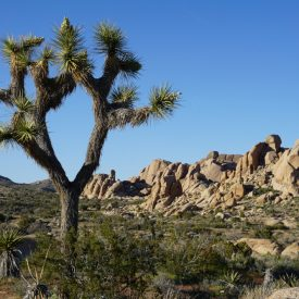 Joshua Tree National Park (Californië, Verenigde Staten)
